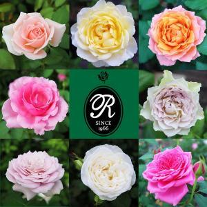 Rose for You ◆プレミアムなあなただけのバラ◆