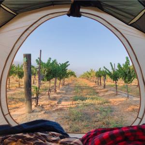 カリフォルニア・パソロブレス ぶどう畑で贅沢キャンプ