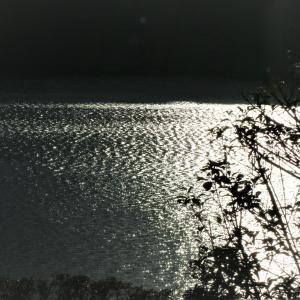 再びのダム湖