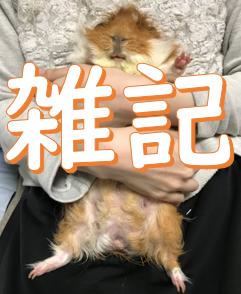 https://mofumofu.jp/2019/11/20/1564/