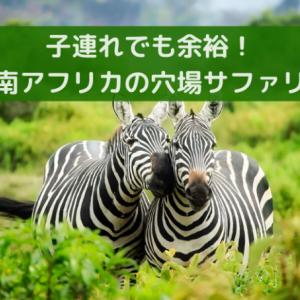 子連れ南アフリカ、サファリの旅【Madikweが一押し!】