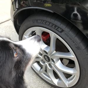見知ゅらん犬が映ってる?