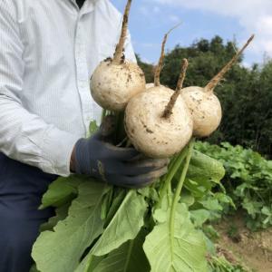 〜福岡 週末農業(第13回目作業)〜 秋冬野菜の収穫開始
