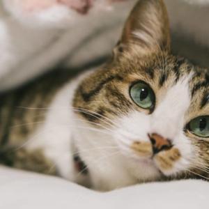 【今夜くらべてみました】バカラの器も!?「猫に依存する女たち」で紹介されている猫グッズの購入方法は?