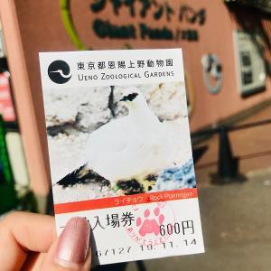 上野のアイドル! パンダのシャンシャンに会いにいきました