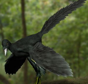 南米に始祖鳥の生き残りがいる? ~ ツメバケイ