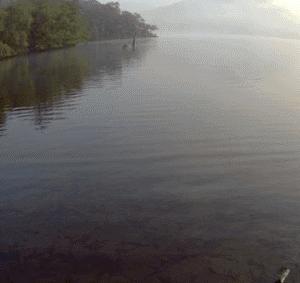 ウィンダミア湖で撮影されたレイク・モンスター ~ ボウネッシー