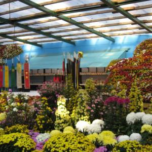 弥彦神社の菊まつり