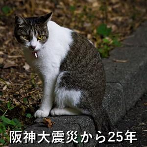 阪神大震災から25年
