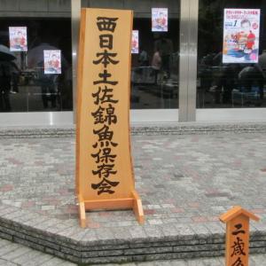 西日本土佐錦魚保存会品評会!分譲魚もゲットしました!