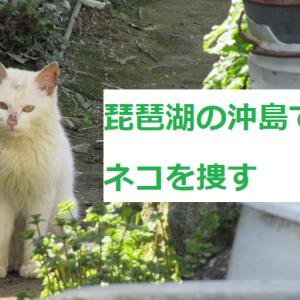琵琶湖の沖島でネコを捜す