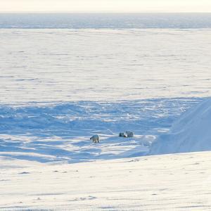 【ロシア】北極圏の氷が熔けて島が5つ出現