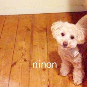 こんにちはninonです