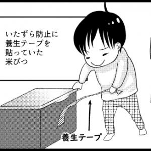 【生後6ヶ月頃~?】箱をこよなく愛している。