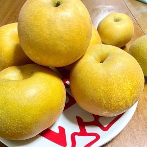 梨の直売所「北島梨園」でおいしい梨を購入!7月末〜10月中旬までの季節ごとの楽しみ!  小山市