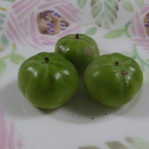 柿のちびたん