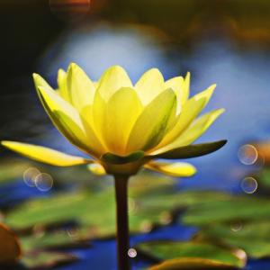 仏教の正念からマインドフルネスは宗教的な部分を排除したもので受け入れやすいもの?