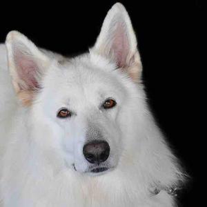 今日は、キンナンバー190白い犬青い夜音6の1日です。