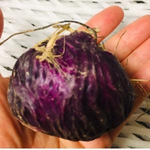 謎野菜の正体