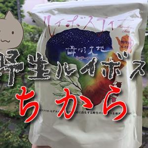 野生種マザーアースルイボスティーの効果がやばい!