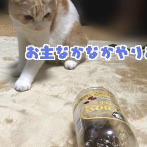 【猫ブログ】スコティッシュホールドの天とペットボトル