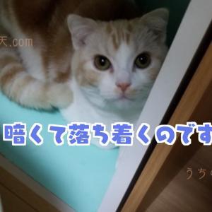 【すきま猫】スコティッシュフォールドの天と秘密基地【癒しの猫ブログ】