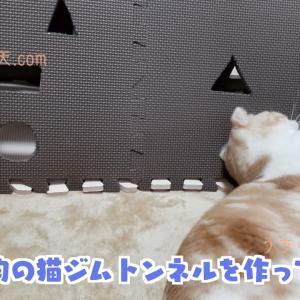 自作猫ジムトンネルを100均のあれ「ジョイントマット」で作ってみた。超簡単な作り方