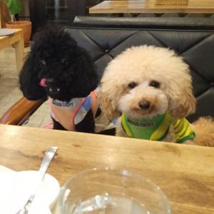 deco's dog cafe田園調布にいってみた。
