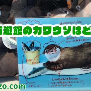 【海遊館】2019年最新版カワウソはどこにいるの?「JAPAN FOREST(日本の森)」でよく寝てるよ!