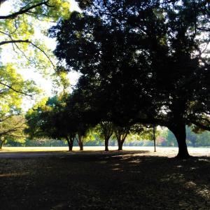 日米陸軍が残した木々たち 後編