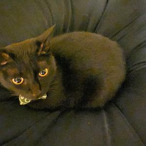 黒猫の黒目
