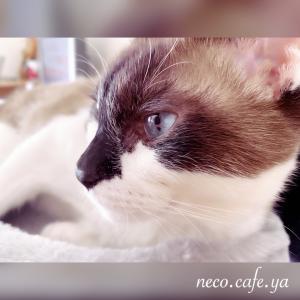 マイブーム 〜これだから猫はたまらない♪〜