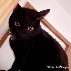 ピンチもあった猫との暮らし Part 2