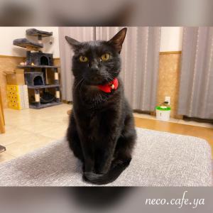 黒猫フィーバー♬