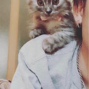 猫の背中乗り  ロゼ
