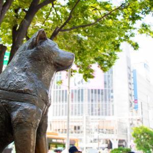 渋谷の人気占い師まとめ!国内屈指の占い激戦区であなたにピッタリの占い師を探せ!