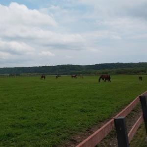 小泉牧場を見学するには