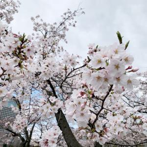 4月3日は最大開運日!