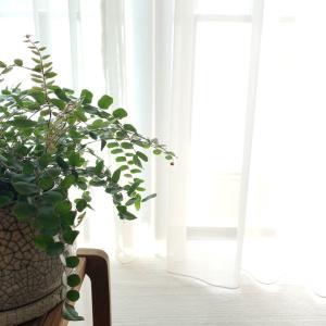 【おうち時間】5分でできる!簡単カーテンの作り方