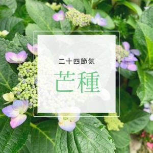 【芒種】二十四節気 9番目~もうすぐ梅雨入りの季節~