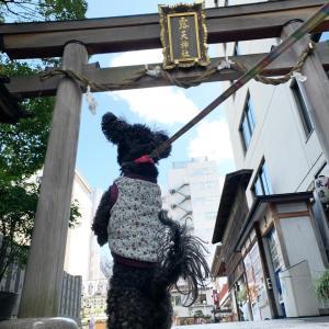 吉方位散歩はお初天神 神社に住む猫さんに会えた