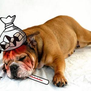 犬の病気 進行性網膜萎縮症(PRA)編