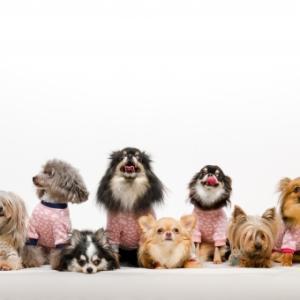 共働きで留守がちでも犬を飼えるの?