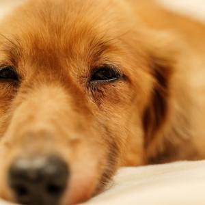 愛犬の寝姿で解る心理状態