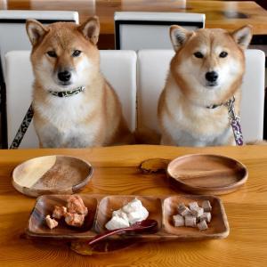 仔犬が起こしやすい食事のトラブル