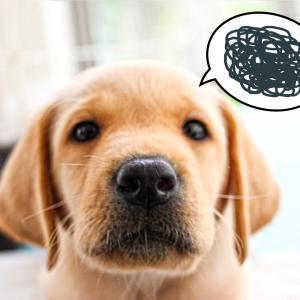 愛犬の難聴
