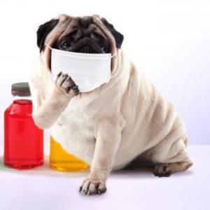注意すべき愛犬のクシャミ
