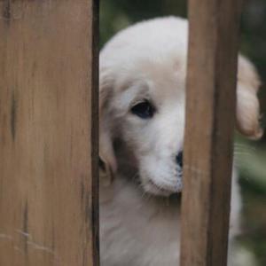 愛犬が悲しんでいるときの仕草6つ