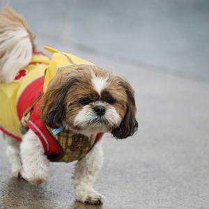 愛犬が雨に濡れてしまうと臭う理由