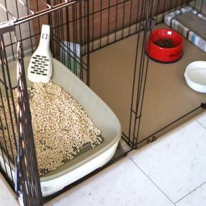 愛犬がトイレを我慢しているときにする4つの仕草
